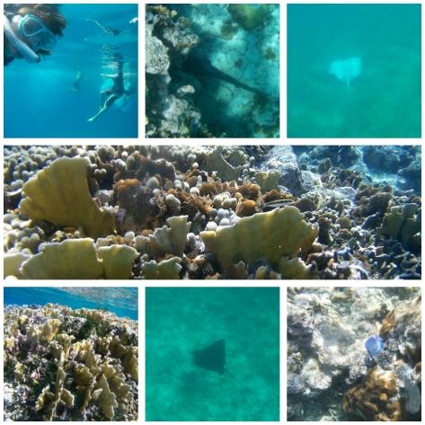 Schnorcheln in der Unterwasserwelt von San Blas