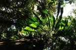 Wald von Monteverde